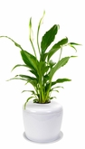 White Cremation Urn System For Flowers Or Plants