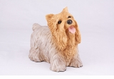Youthful Standard Yorkshire Terrier Hollow Figurine Pet Cremation Urn - 2790