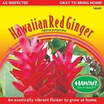 3 Packs of Fresh Hawaiian Red Ginger Roots