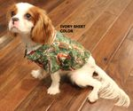 Surfboards Design Collection Dog Shirt