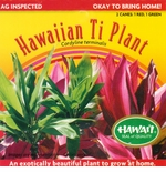 2 Packs of Hawaiian Ti Leaf Canes