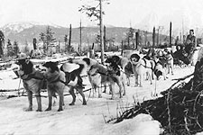 1st Dog Sled Team To Go From Nome to Seward Photo Print for Sale