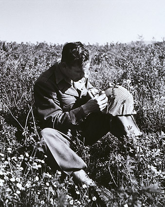 American Soldier Picks Flowers Italy, 1945 Photo Print