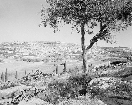Bethlehem, Palestine from the East 1945 Photo Print