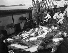 Early Alaska Fishermen w/ Halibut & Codfish Photo Print for Sale