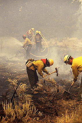 Firefighters Clearing Brush After Yellowstone Wildfires Photo Print