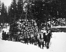 Forest Logging w/ Sleigh & Horses 1910 Photo Print