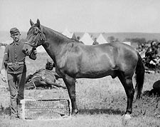 General George Custer Horse That Survived Photo Print for Sale