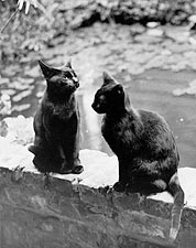 Kitten Cats, New Orleans, Louisiana 1920s Photo Print for Sale