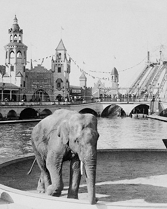 Luna Park Coney Island Elephant NYC 1904 Photo Print