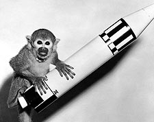 NASA Squirrel Monkey Miss Baker with Model Rocket Photo Print for Sale