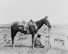 Old West Cowboy & Horses Bonham Texas 1910 Photo Print