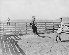 Old West Cowboy & Wild Bronco Texas Ranch Photo Print for Sale