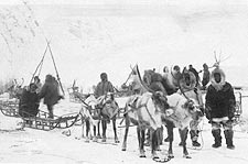Reindeer Sledding Team 1922 Alaska Photo Print for Sale