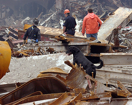 Rescue Dog and Search Crew 9/11 Photo Print