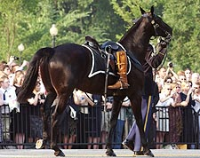 Ronald Reagan Funeral Riderless Horse Photo Print for Sale