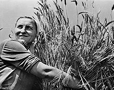 Russian Woman Harvesting Wheat on Collective Farm in 1930s Photo Print for Sale