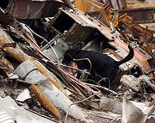 Search and Rescue Dog 9/11 Photo Print for Sale