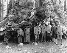 Theodore Roosevelt & Grizzly Giant Tree, CA Photo Print for Sale