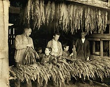 Tobacco Farmer Family Lewis Hine 1916 Photo Print for Sale