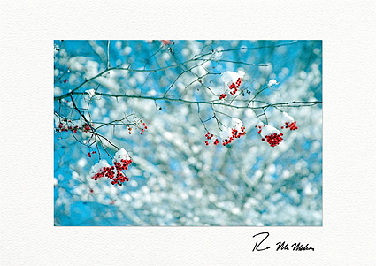 Winter Colors Christmas Holiday Individual Greeting Cards