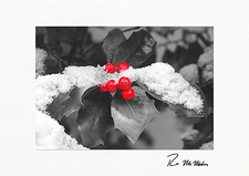 Winter Holly Christmas Boxed Holiday Cards