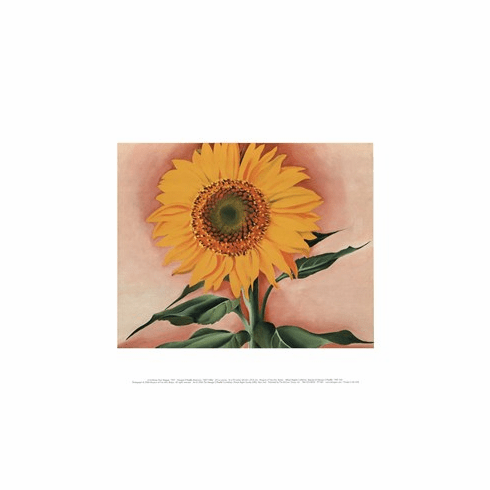 O'Keeffe <i>A Sunflower from Maggie</i>