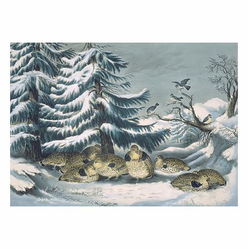 MFA <i>Snowed Up, Ruffed Grouse in Winter</i> Holiday Cards