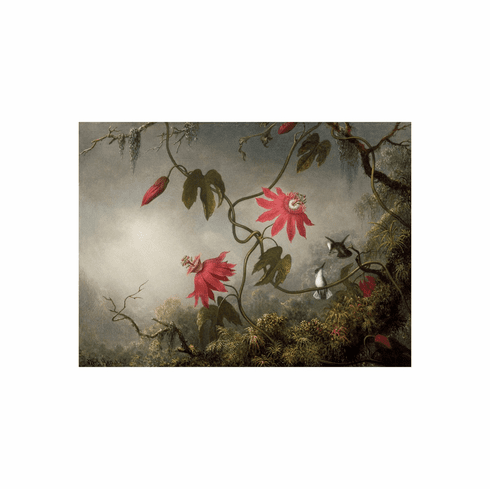 <i> Passion Flowers and Hummingbirds</i>  <br>11x14 Matted Print