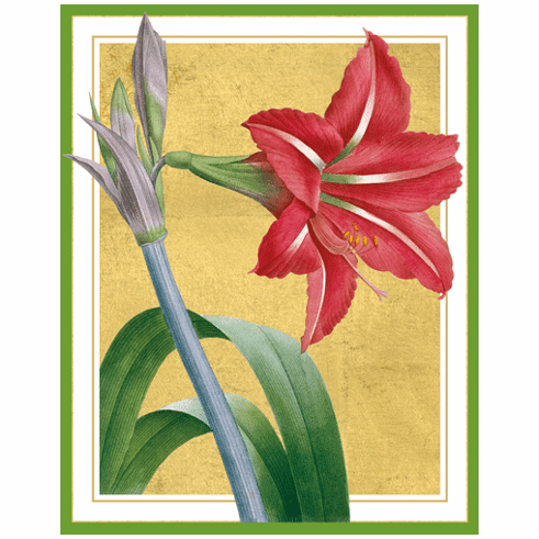 Red Amaryllis Holiday Card