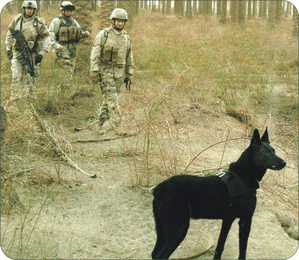 Army Working Dog on Duty in Iraq Mouse Pad
