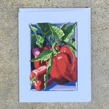 Bull Nose Pepper Notecard
