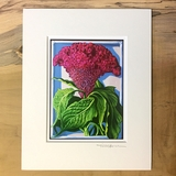 Cockscomb Matted Print