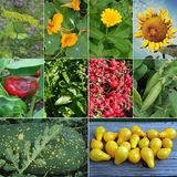 Young Gardener Seed Collection