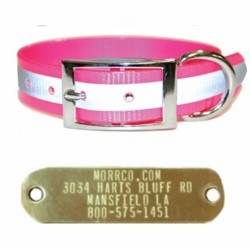 3/4 Reflective Sunglo Dog Collar + Name Plate