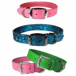 Fancy Leather Collars and Leads