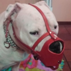 Hand Made Leather Dog Muzzles