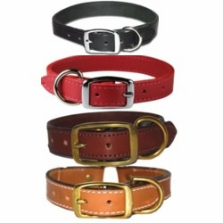 Premium Leather Collars and Leads