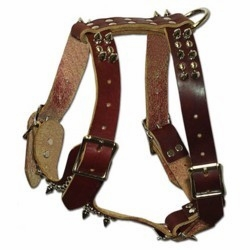 Small Spiked Harness