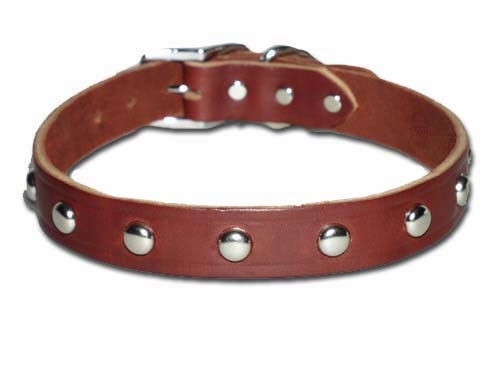 Leather Dog Collar with Studs 3/4 Inch Wide