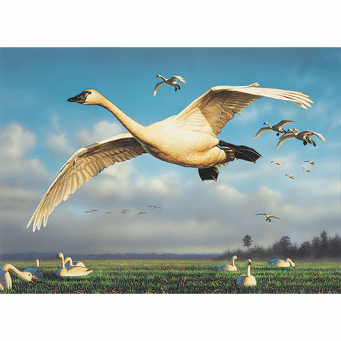 2020 N.C. Waterfowl<br>Conservation Adhesive Stamp