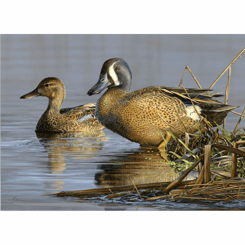 2021 N.C. Waterfowl<br>Conservation Adhesive Stamp