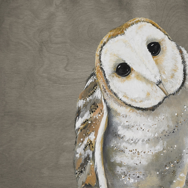 Curious Barn Owl Gray Canvas Art