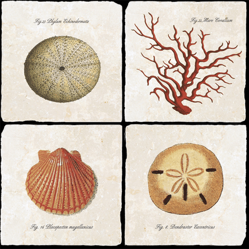 Athenaeum Collection Sea Creatures III Coasters