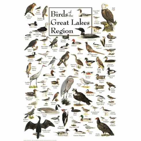 Birds of the Great Lakes Region