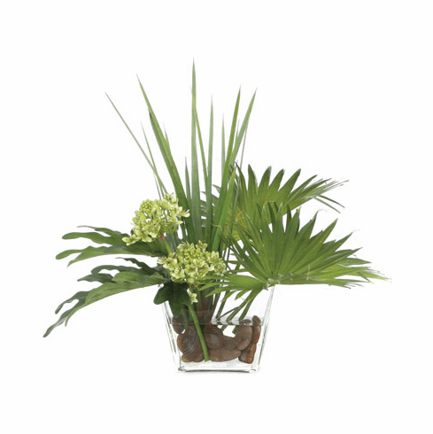 Fan Palm Aggie Waterlike