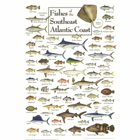 Fishes of the Southeast Atlantic Coast