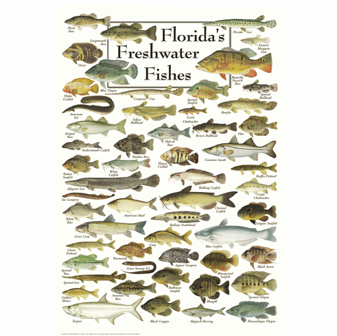 Florida's Freshwater Fishes