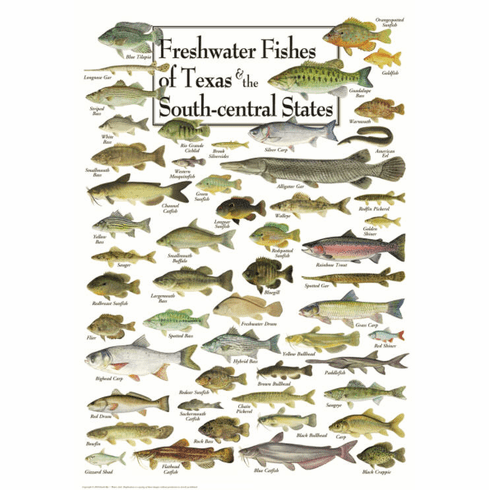 Freshwater Fishes of Texas & South Central States