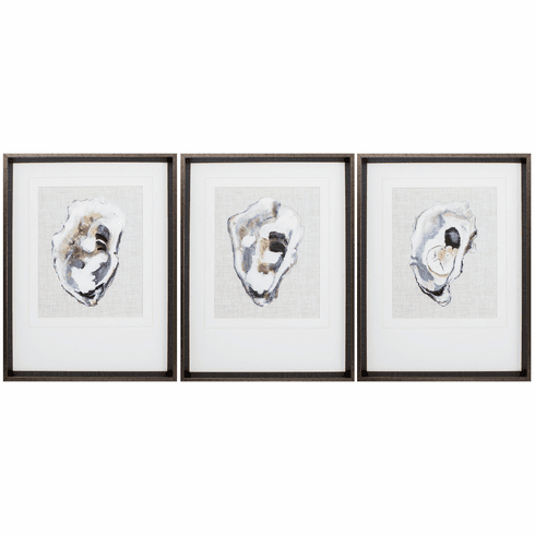 Oyster Shell Study - Set of 3